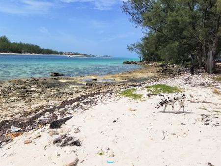 view Father's Day Escapade to Bimini, Bahamas